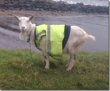 safety scapegoat